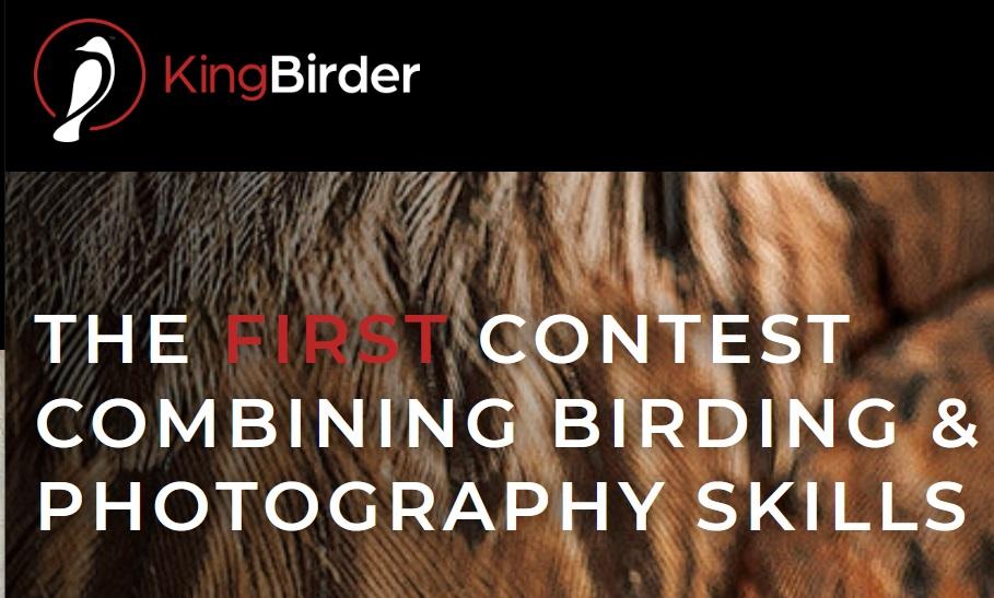 KingBirder