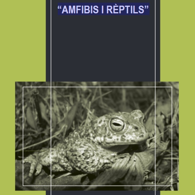 AMFIBIS I RÈPTILS